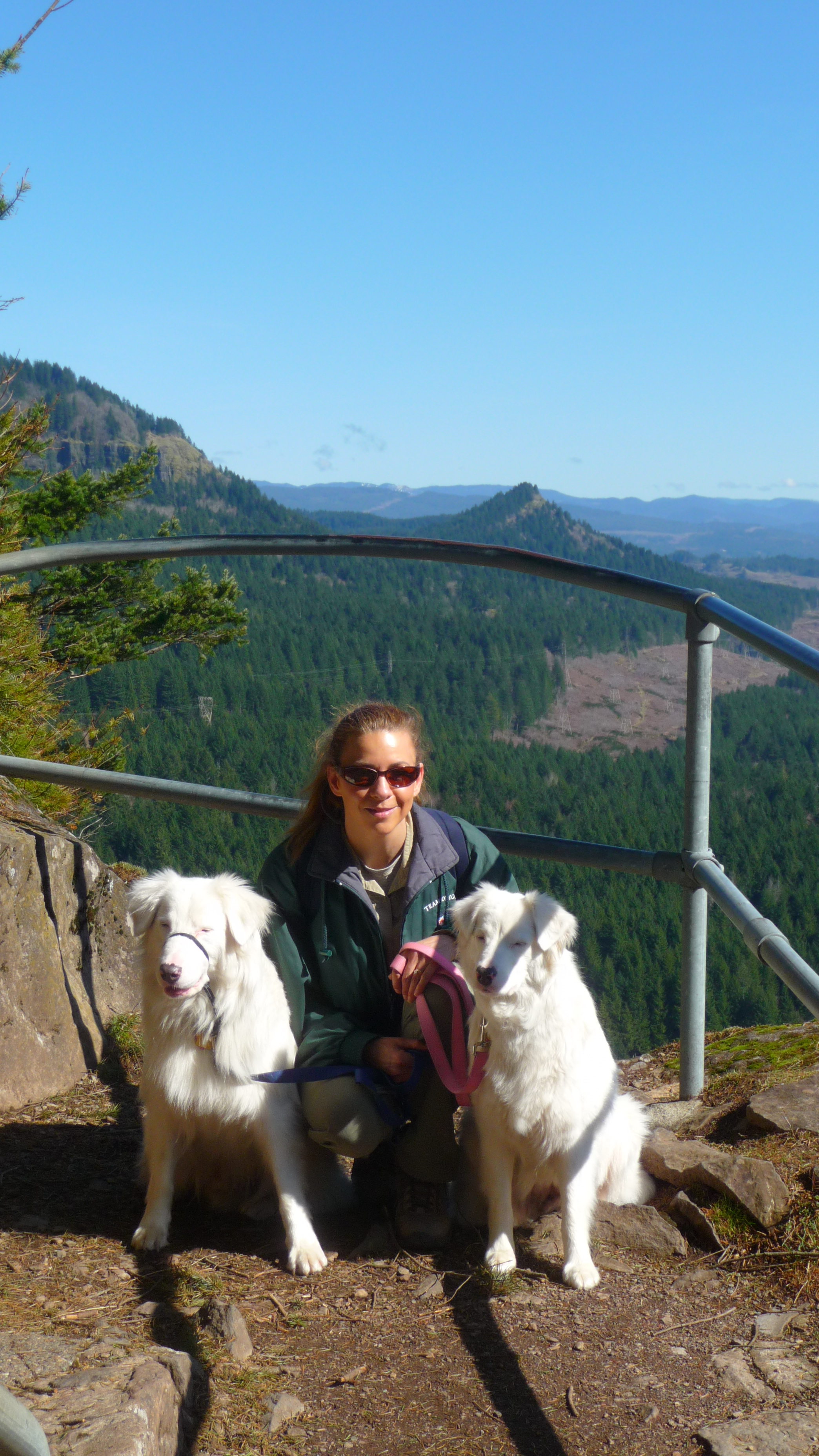 Challenge and Baby Girl on their first hike with us - Beacon Rock. FYI: A mostly scaffolding hike is not the best idea with sight-impaired dogs