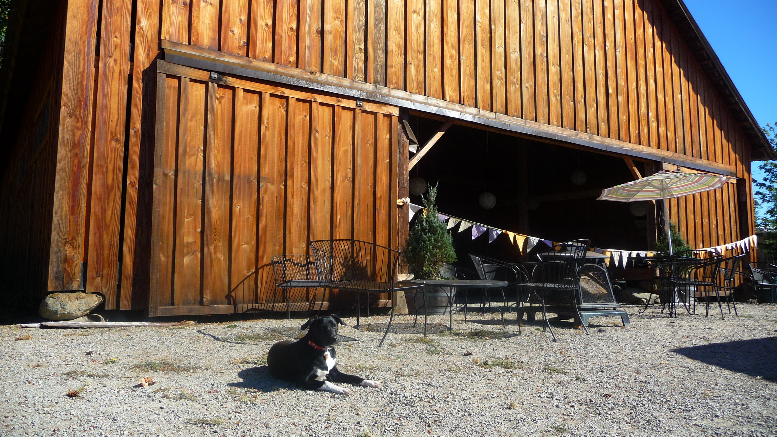Cherish's pup posing in front of Heisen House Vineyards' historic barn