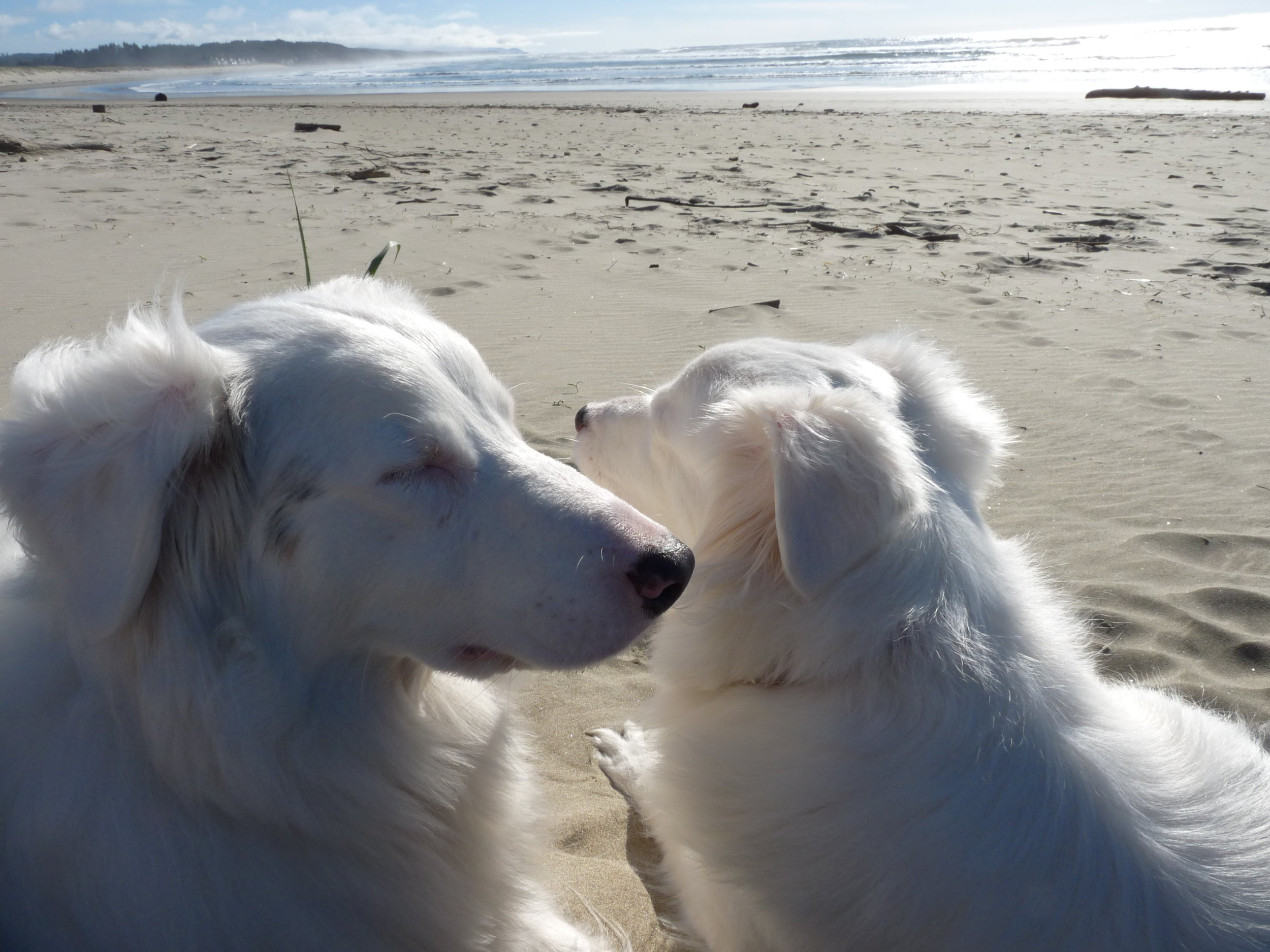 Another glorious day along the Oregon Coast near Newport in...February. Truly white dog weather.