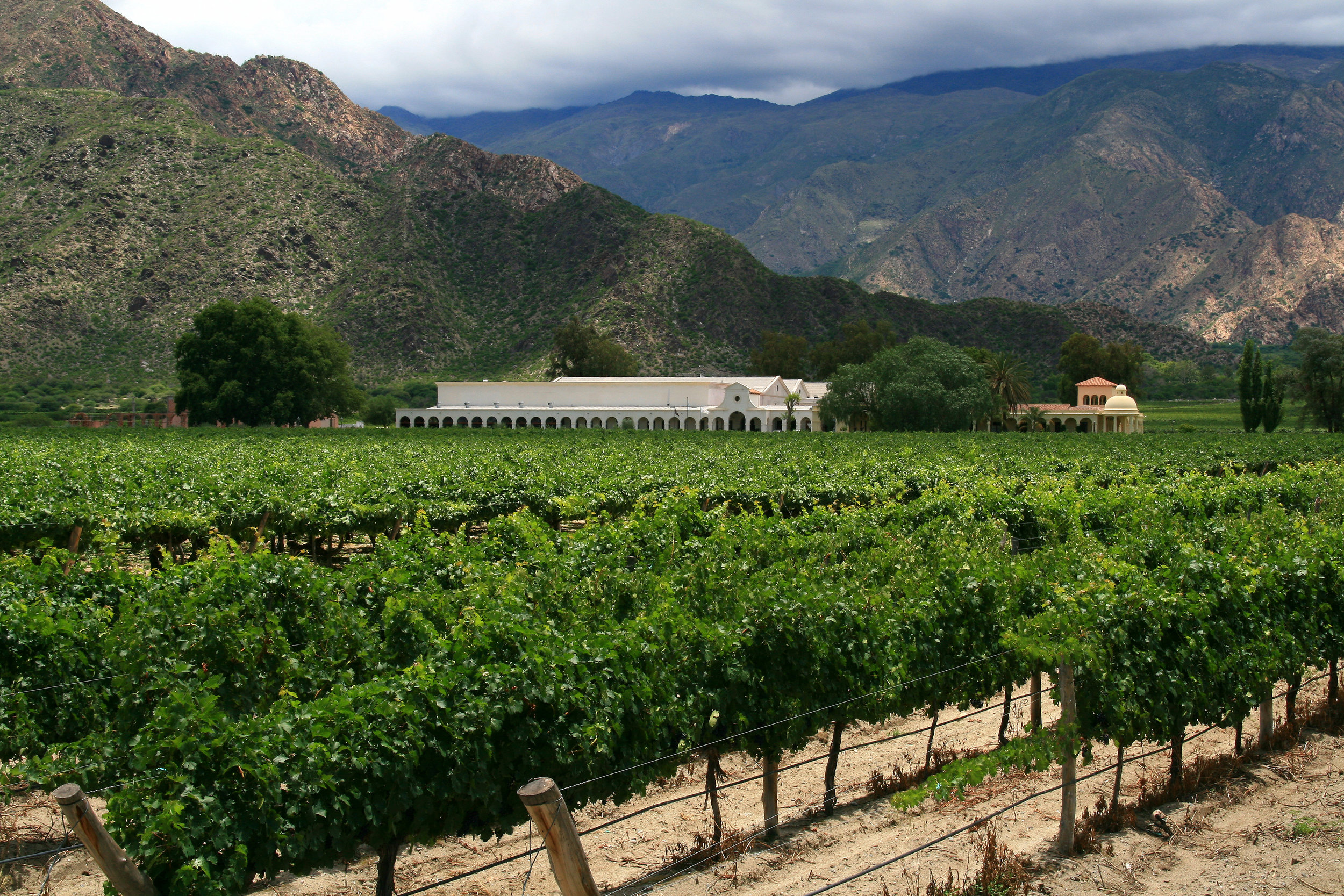 Malbec from the Northwest region of Argentina is not as inky in color as those found in the Mendoza region but their more peppery notes allow for slightly different food pairing options. Photo courtesy of Tanenhaus/Flickr.