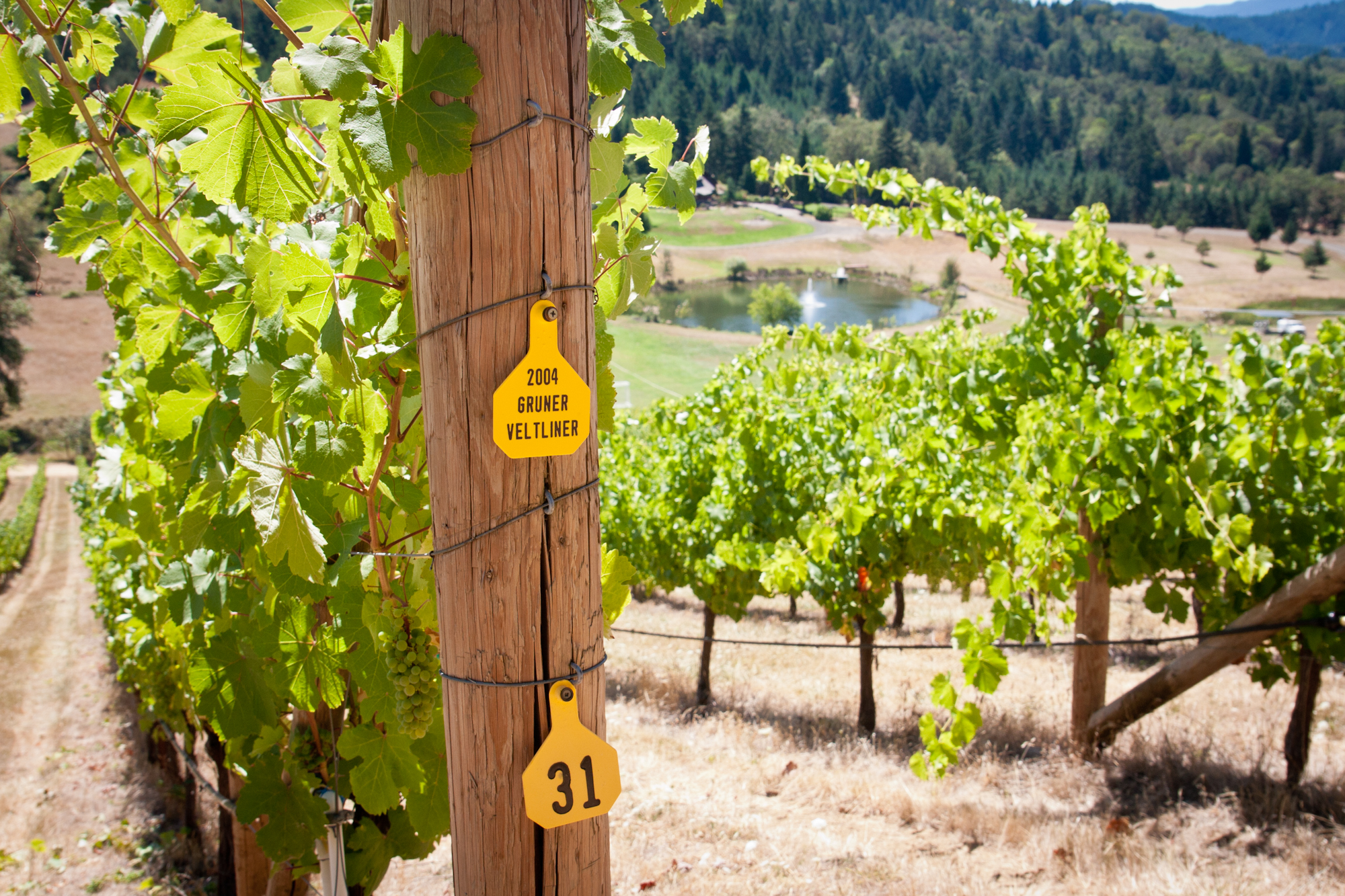 Reustle-Prayer Rock Vineyards, located in the Umpqua Valley, was the first to commercially produce grüner veltliner in the United States. Photo courtesy of Reustle-Prayer Rock Vineyards.