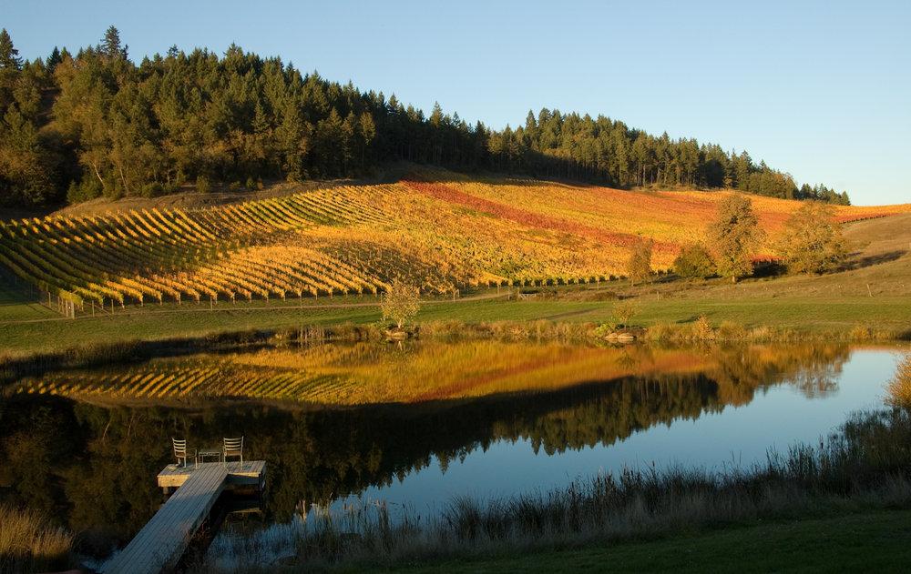 Reustle-vineyard.jpg