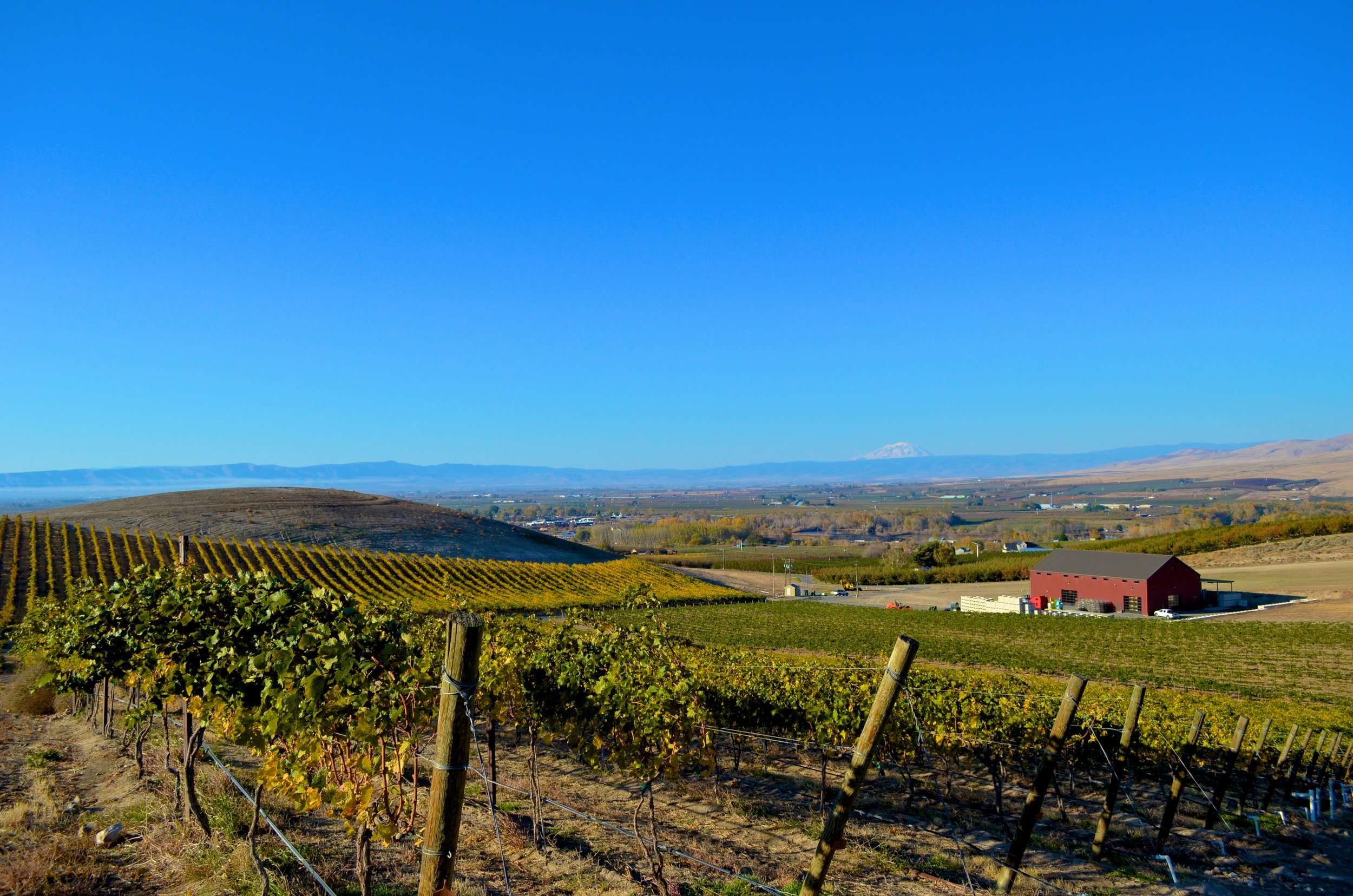 Owen Roe's new winery and vineyard in the Yakima Valley. Courtesy of Wine Yakima Valley.