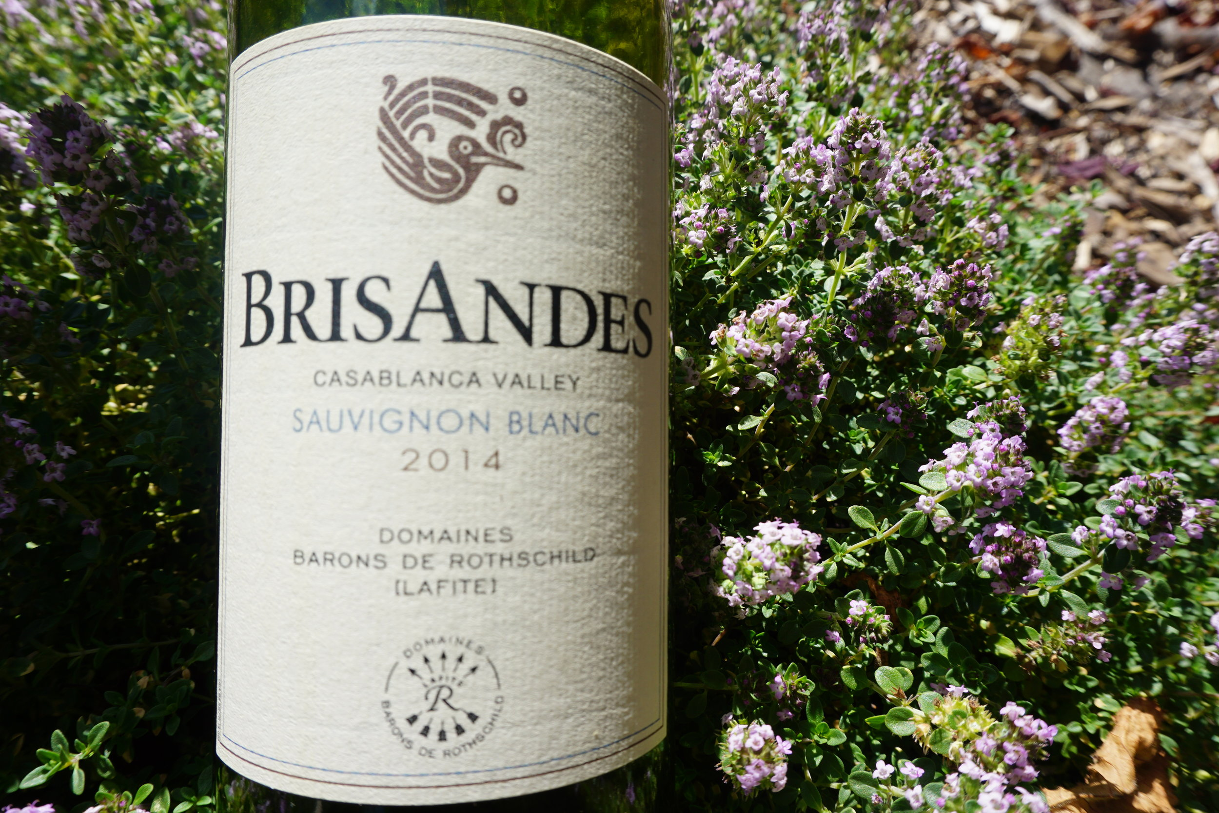 Brisandes, Casablanca Valley – 2014 Sauvignon Blanc - is an excellent value from Chile giving off more citrus than tropical notes. Viki Eierdam