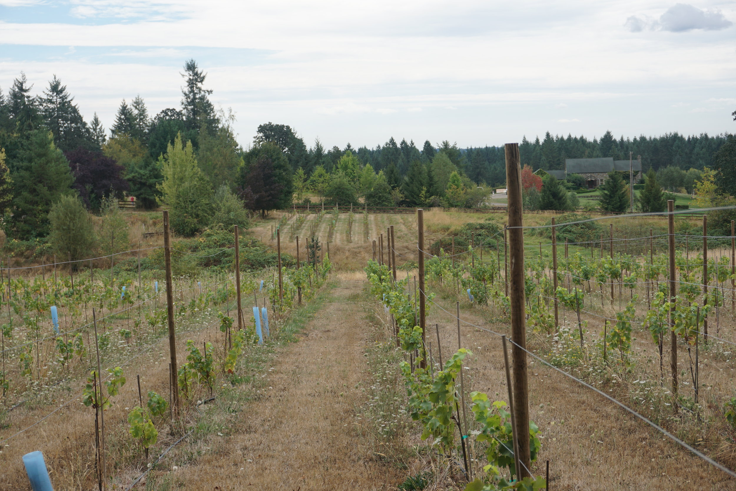 One-third of an acre planted in pinot meunier (shown in the background) is a telltale sign that Rezabek Vineyards has all the makings for estate-grown sparkling wine. Viki Eierdam