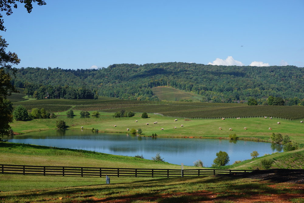 Trump Winery in the Monticello AVA has a breathtaking Virginia view from their expansive outdoor seating. Viki Eierdam