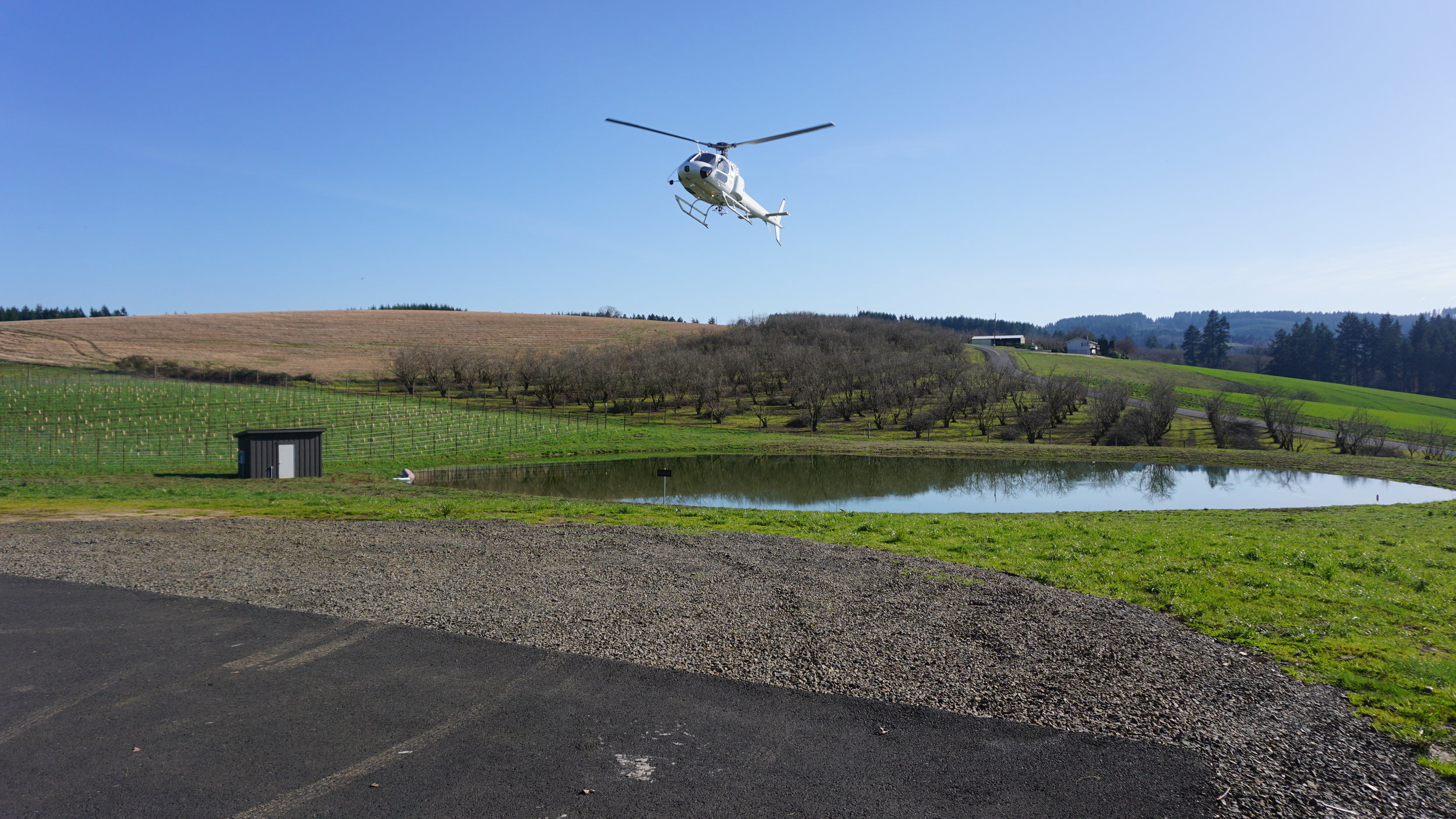 Tour DeVine, operated by Precision Helicopters, approaches Ponzi Vineyards  in the Ribbon Ridge AVA on a custom wine tour. Viki Eierdam