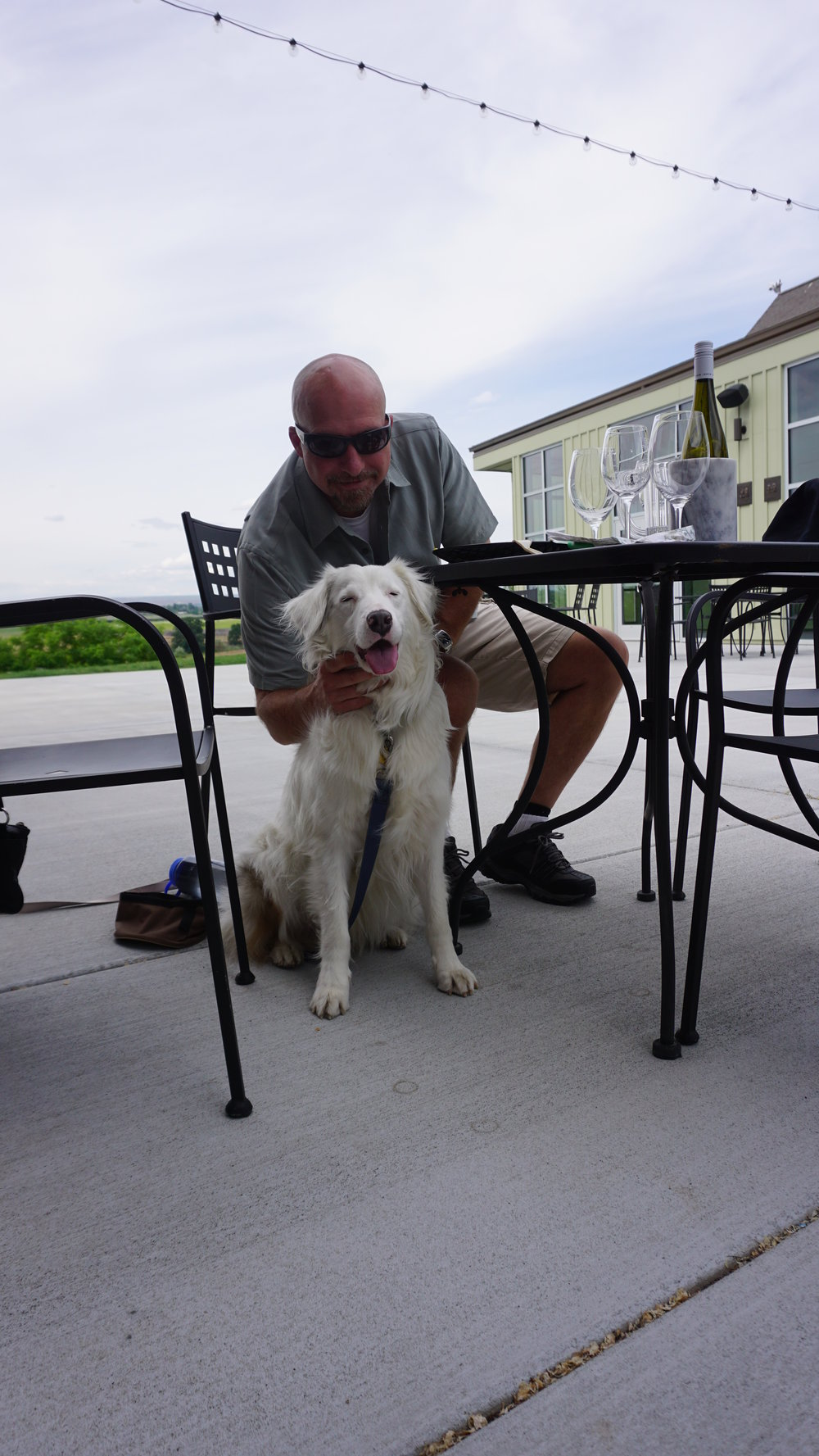 The patio at Walter Clore is dog-friendly. That makes Challenge happy. Viki Eierdam