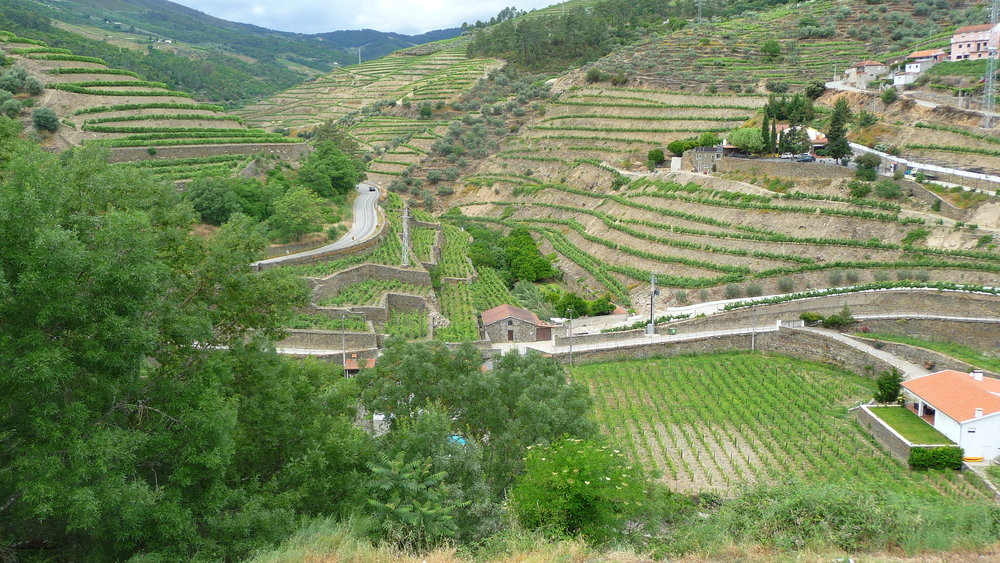 Douro Valley terraces – The Douro Valley is the heart of vineyards growing grapes destined to become Port. Criss-crossed with retaining walls, terraced vineyards and steep roads, harvesting is a combination of manual and mechanical. Viki Eierdam