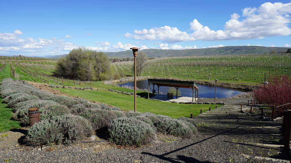 The 300 acre  Gilbert Cellars' Hackett Ranch  takes advantage of valley views and the wines crafted by Justin Neufeld celebrate the inspiration he finds in the great outdoors. Dan Eierdam