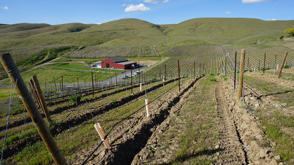 David O'Reilly will tell you that their site at Owen Roe Winery is one of the warmest places in Eastern Washington in the wintertime. Dan Eierdam