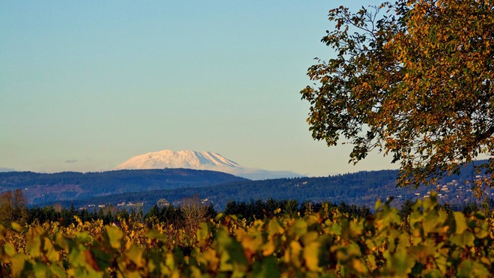 View of Mt. St. Helens and vines from English Estate Winery. Courtesy of SW Washington Winery Assn.