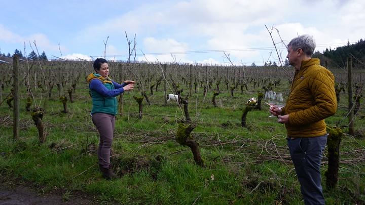 Associate winemaker,Katie Santora, discusses pruning techniques while some of the team members' pups frolic in the vineyard. Viki Eierdam