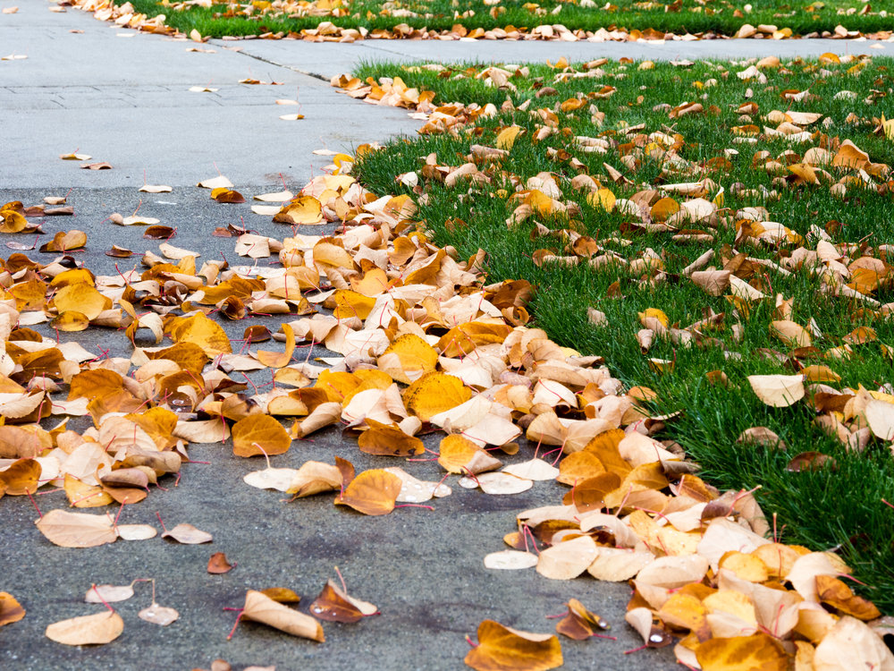 4 Landscape Maintenance Tips for the Early Winter in Bethlehem, PA