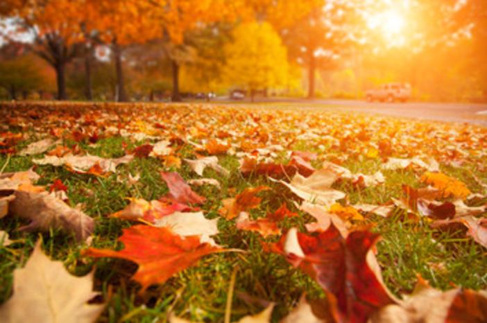 Seasonal clean-ups - landscape maintennace in Allentown, PA