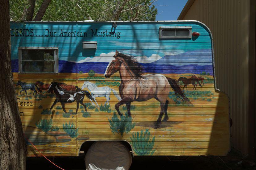 Wild Horse Festival 2012