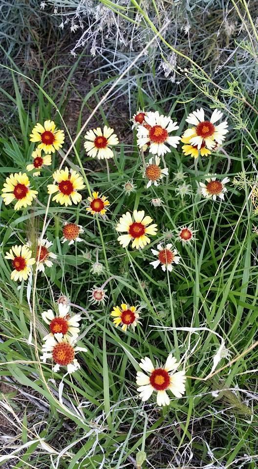 Wildflowers on Morning Walk