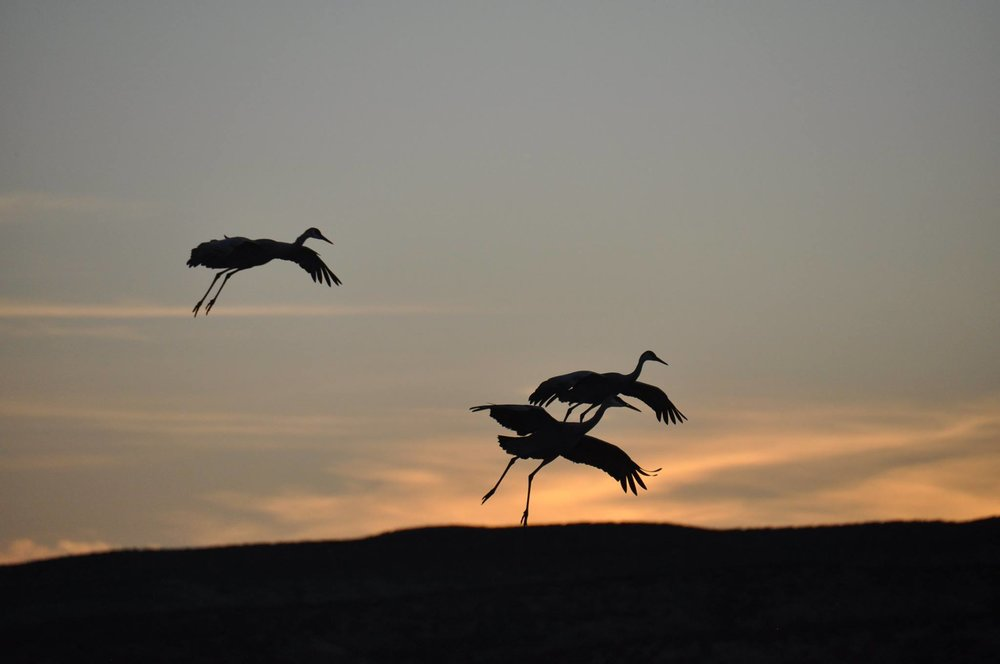 Bosque del Apache Festival of the Crane 2015