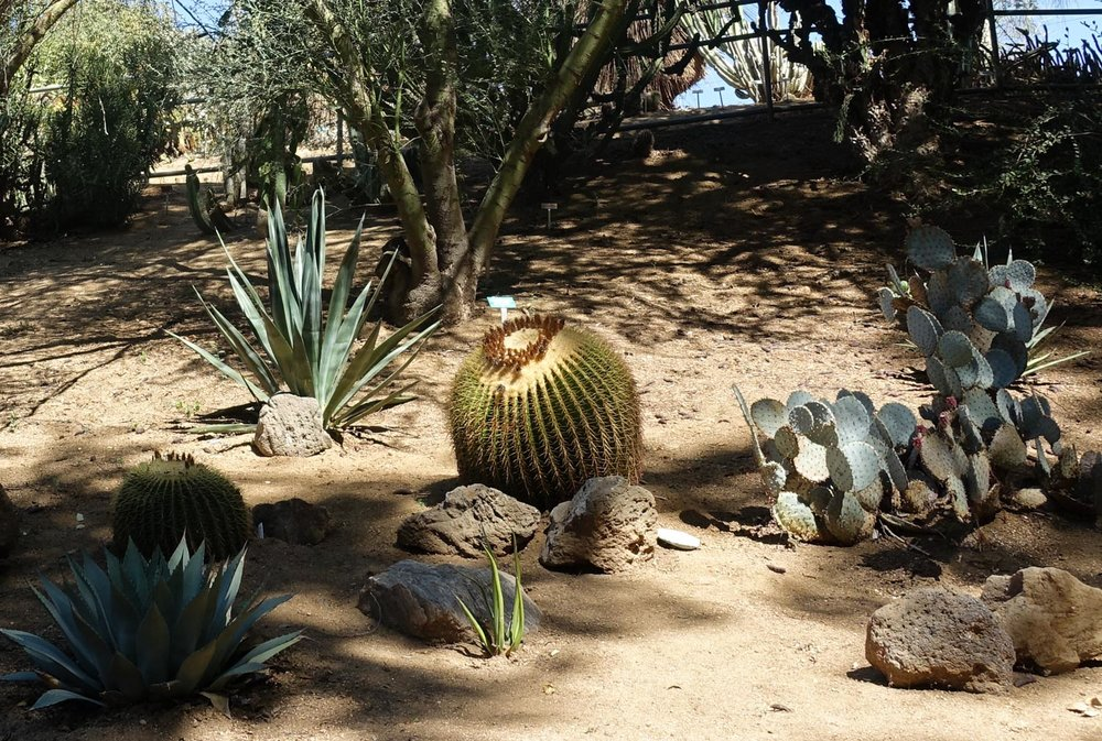 Cactus and Succulent Gardens