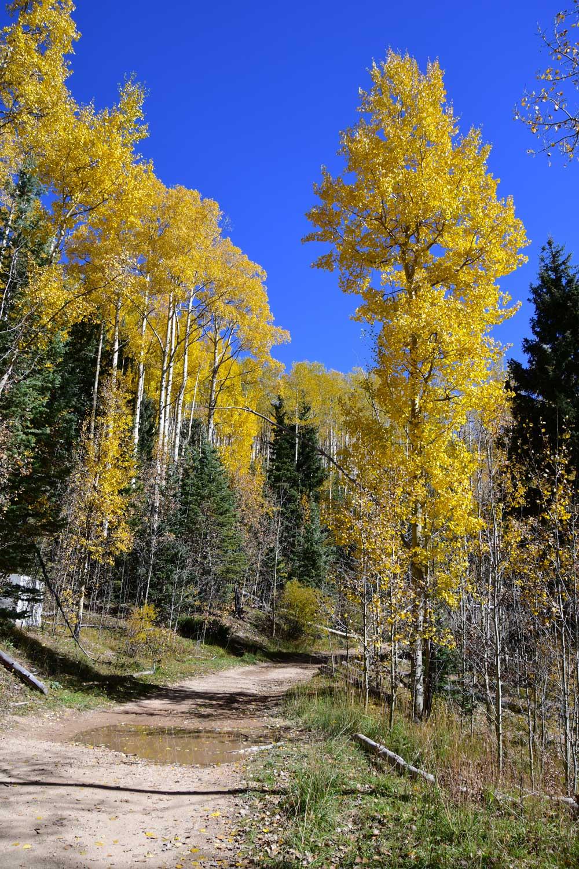 Aspen Vista Trail 2017