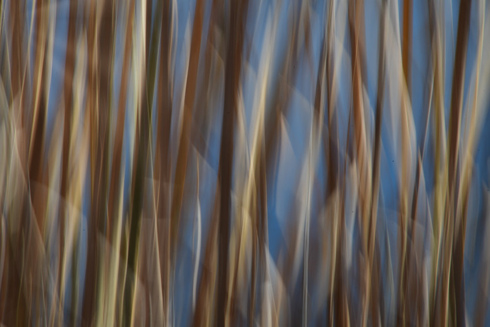 Abstracts in Nature