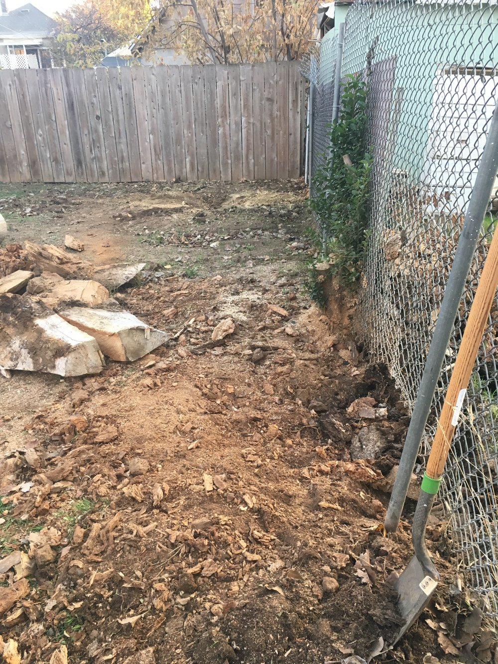 - Remember that giant stump all snuggled up against the chain link fence? This is what I managed to do with a chainsaw and a shovel. Boom, baby!