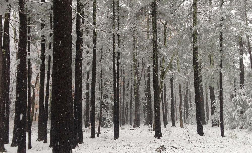 EM_Slideshow_pines.jpg