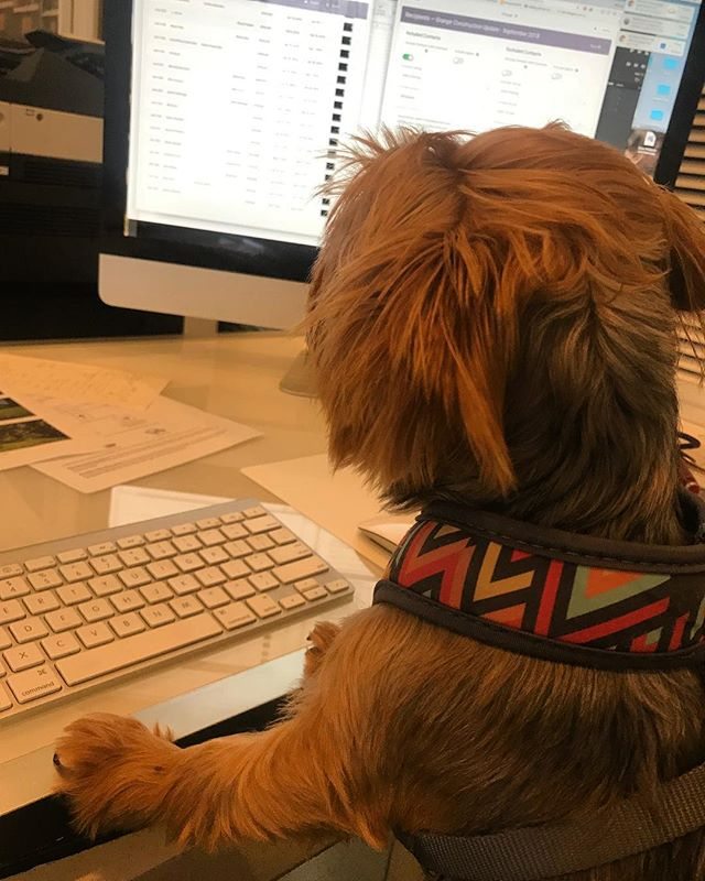 Pixie keeping the office running smoothly! #dogsofbmg