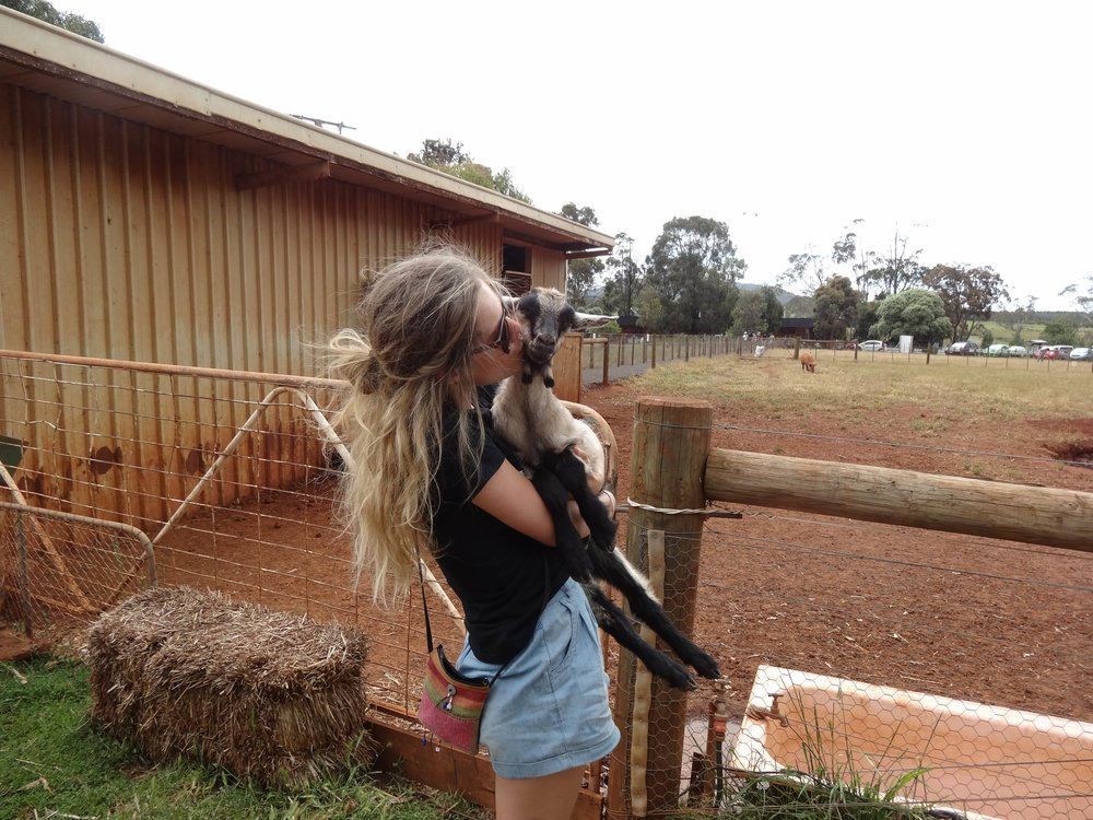 Bronte, eaSY vegan food founder, giving some love to a very special friend at edgar's mission farm sanctuary in victoria, aus.