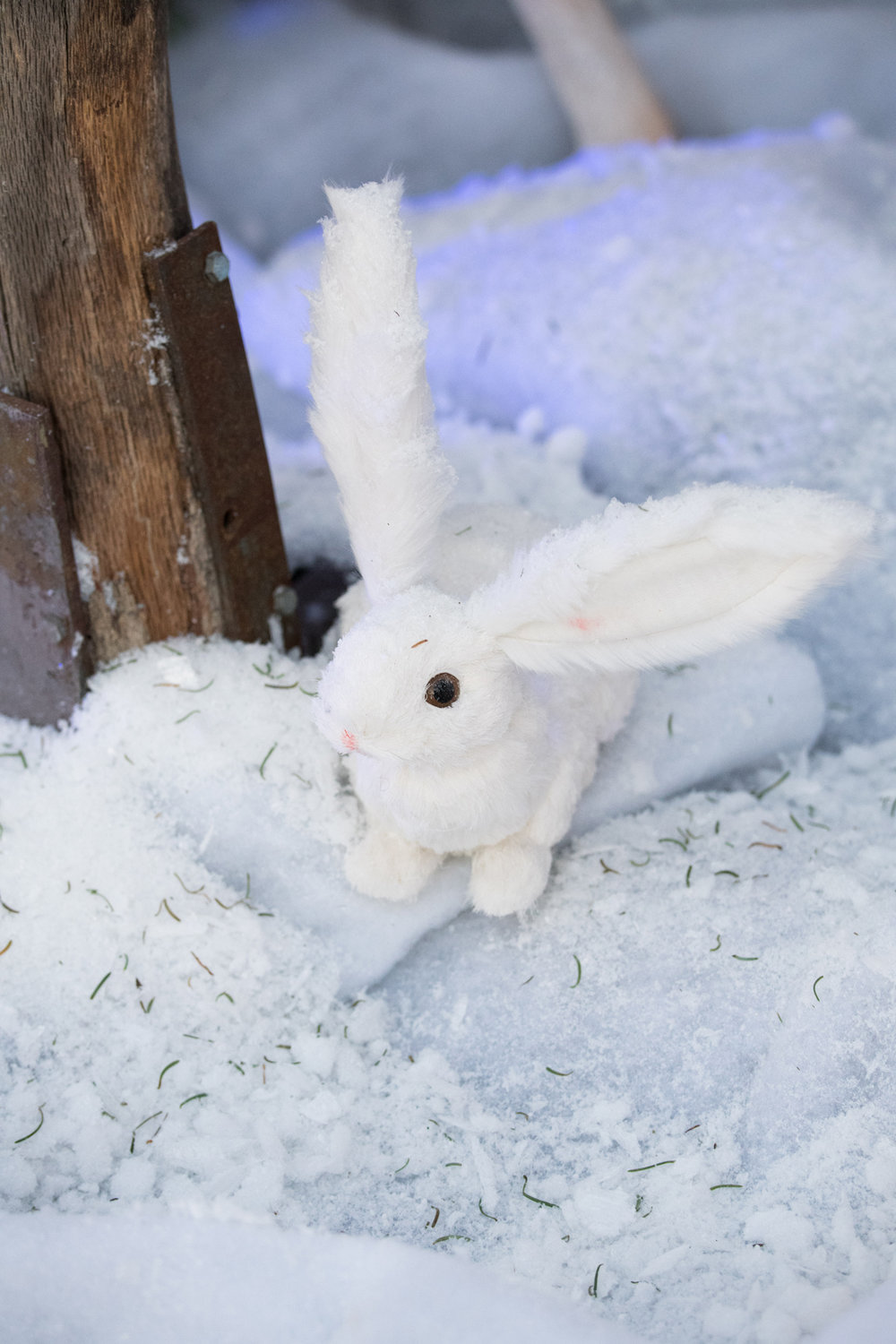 Narnia Inspired Opulent Winter Wonderland Party tiny bunny in the snow.jpg