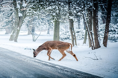 Deer Deterrents - Protect your landscape against damage caused by deer during the fall and winter months.
