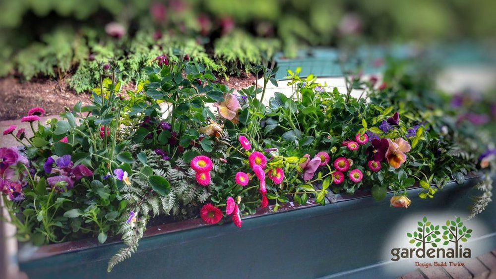 Gardenalia container spring flowers