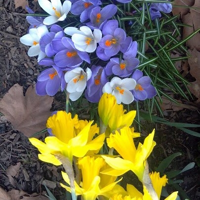 Spring -