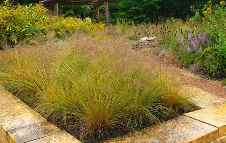 Sporobolus heterolepsisPrairie Dropseed - Mature size: 2-3' W x 2-3' HNotes: Graceful, fine textured, clump-forming grass; attractive pinkish-brown seedheads in late summer/fall