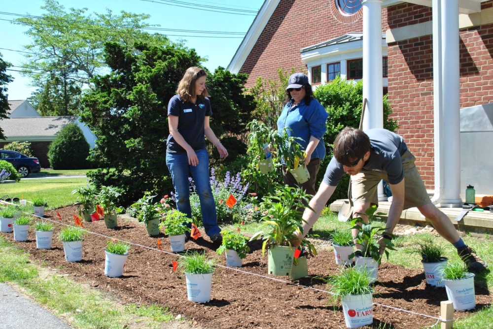 Osterville Rain Garden with Town and APCC.jpg