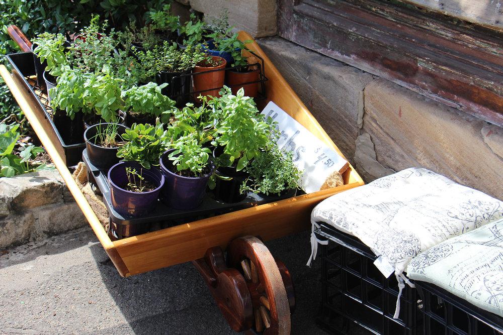 Fresh Seasonal Herbs