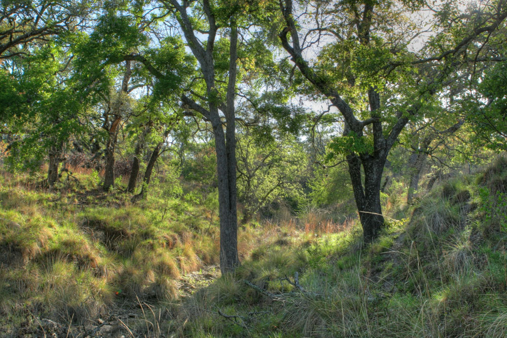 Cypress Valley-1.jpg