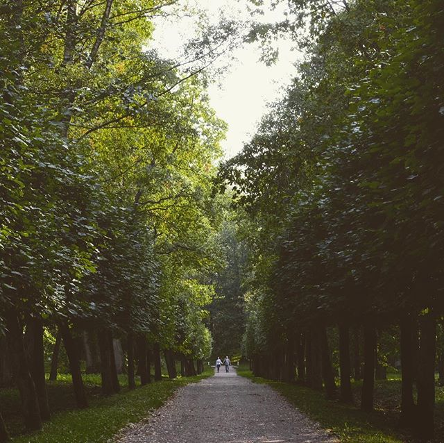 A Walk In The Park . Visit the website @ www.palebluedotphoto.ca (link in profile) . #russia #stpetersburg #russia_pics #stpetersburgrussia #россия #nature #walk_on_russia #photorussia #природароссии #природа #rus_places #питер #travel #russia_img #russ_beauty #photo #санктпетербург #photography #футбол #фклокомотив #travelgram #spb #dtsp #architecture #петербург #peterhof #peterhoff #peterhofer #петергоф #hunting