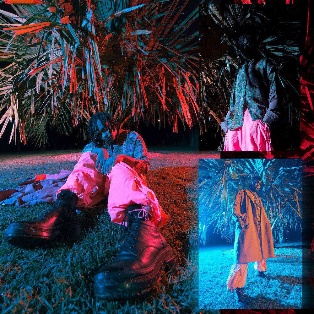 Rovel palm tree shoot .jpg