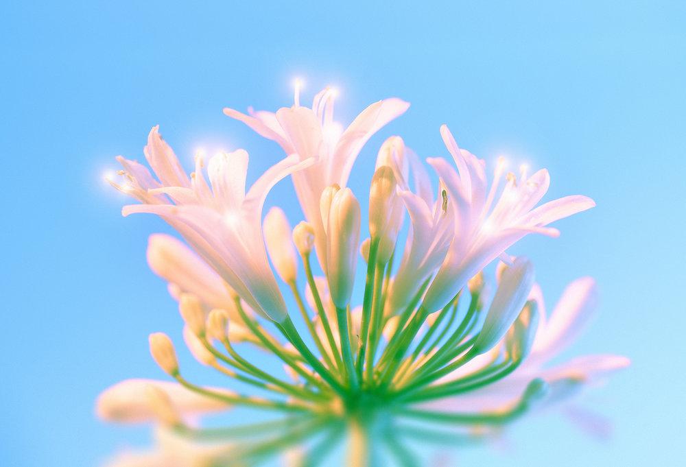 sparkle flowers 1.jpg