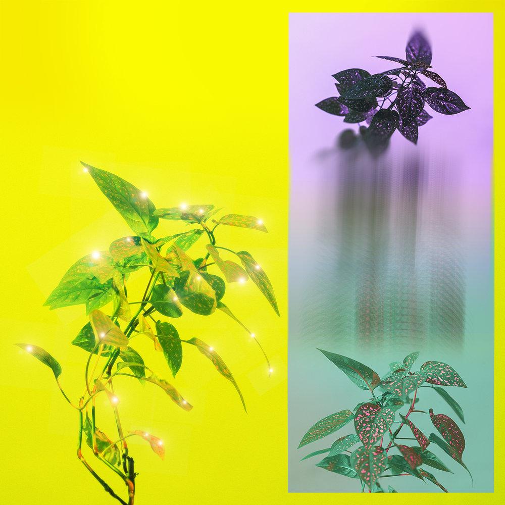 sparkle plant 2.1.jpg