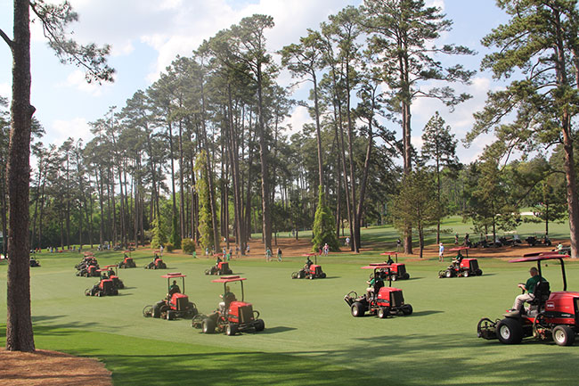 The grass is cut in one direction at Augusta.