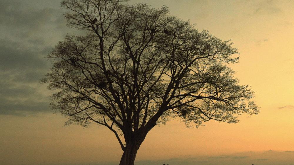 7828_Sri-Lanka_thumbnail_Jacco2.jpg