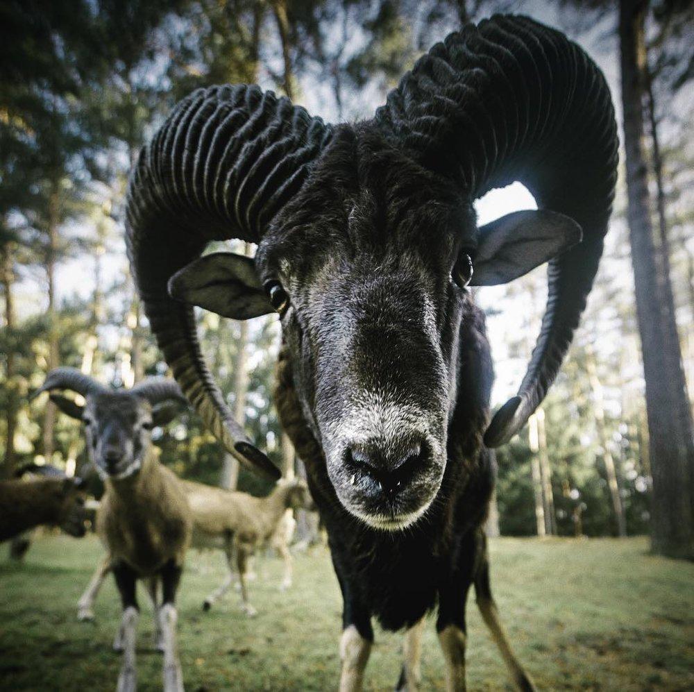 Dude got horns.