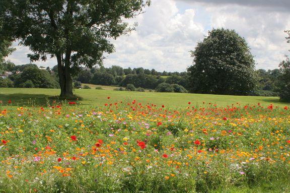 Animal West Park Fields Flower Meadow.JPG