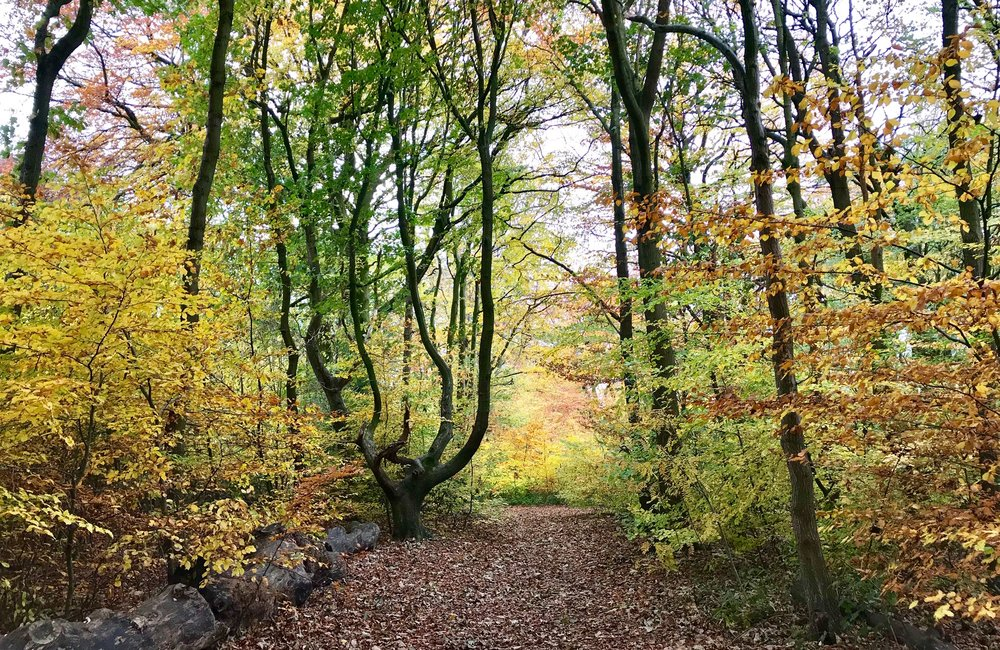 Queen's Wood © HP