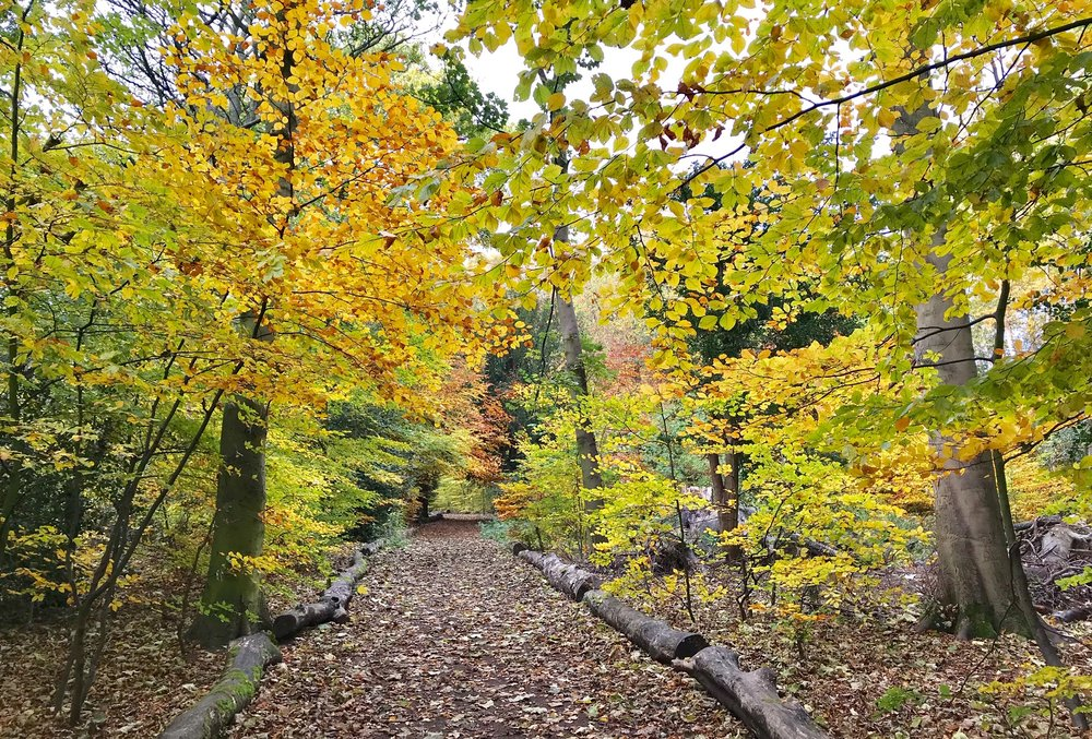 Church Wood © HP