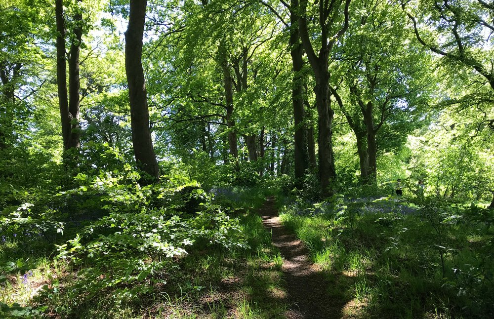 Batcliffe Wood © HP