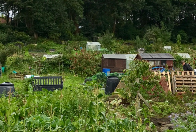 Hollin Lane allotment+FullSizeRender.jpg