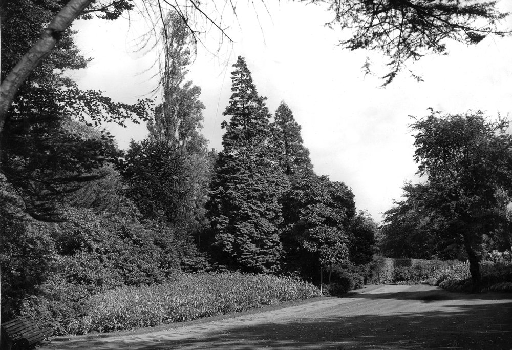 The Hollies, the Old Garden, undated